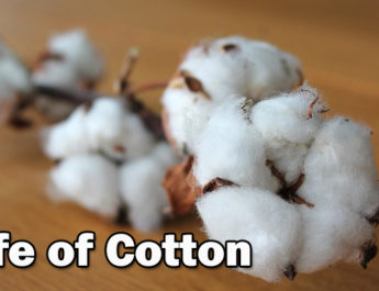 Life of Cotton